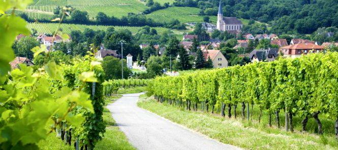 Một đoạn trên con đường rượu vang vùng Alsace - Ảnh: tourisme-alsace