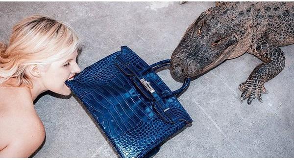 Trung bình mỗi năm hàng chục nghìn cá sấu bị lột da làm nguyên liệu