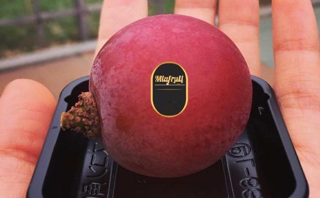Trái nho có kích thước lớn tương đương một trái bóng bàn.