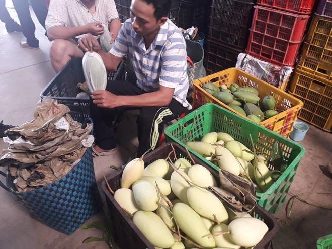 Trái xoài của tỉnh Đồng Tháp chuẩn bị đưa vào thị trường TPHCM tiêu thụ