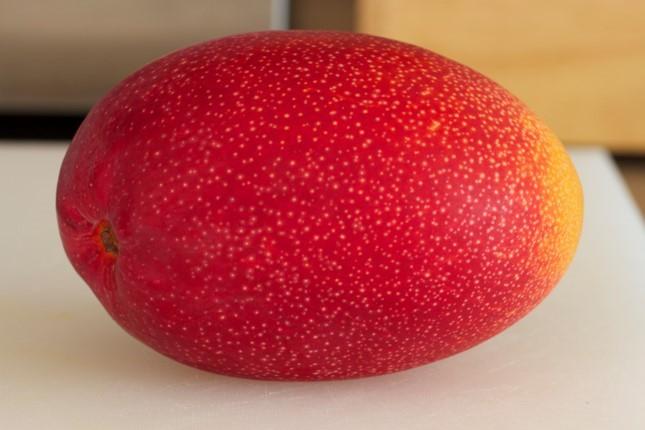 Loại xoài này khi quả chín vỏ có màu đỏ tươi, giá mỗi quả trung bình 1,2 triệu đồng. Ảnh: Người bán cung cấp