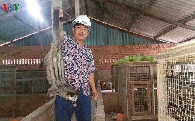 Ông Võ Văn Tiến ở ấp Xóm Đình, xã Kiểng Phước, huyện Gò Công Đông, Tiền Giang vươn lên làm giàu nhờ mô hình nuôi chồn hương.