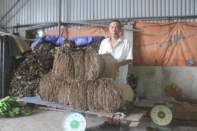 Gia đình ông Thường mỗi ngày thu mua lại khoảng 3 – 4 tạ của các hộ dân xung quanh.