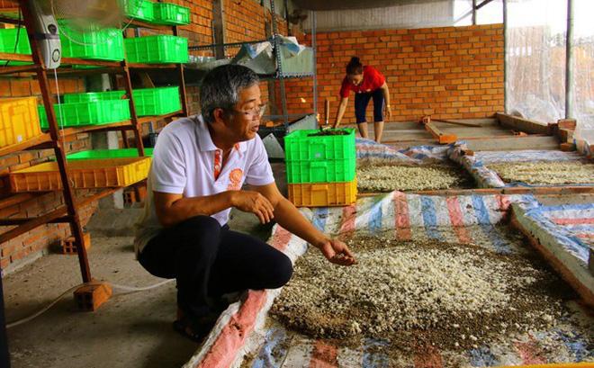 Khu nuôi ấu trùng ruồi lính đen trong trại của gia đình ông Dương Hữu Thoại.