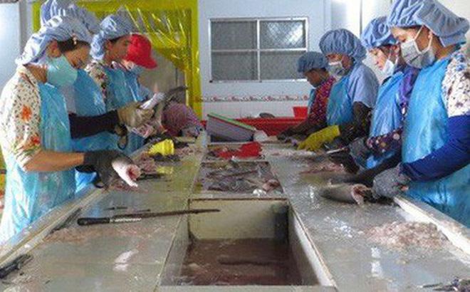 Chế biến cá khô ở huyện Tam Nông