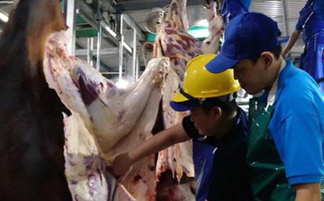 Mổ bò Úc tại một cơ sở tuân thủ ESCAS - Ảnh: AN NA