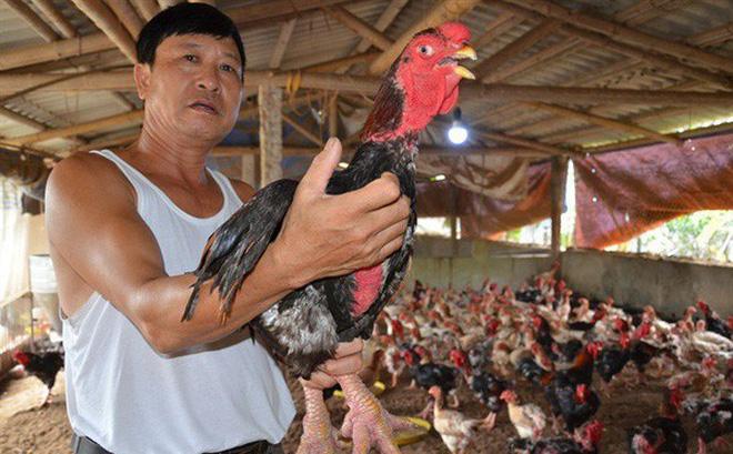 Anh Thát kêu về tình trạng ế ẩm của gà giống