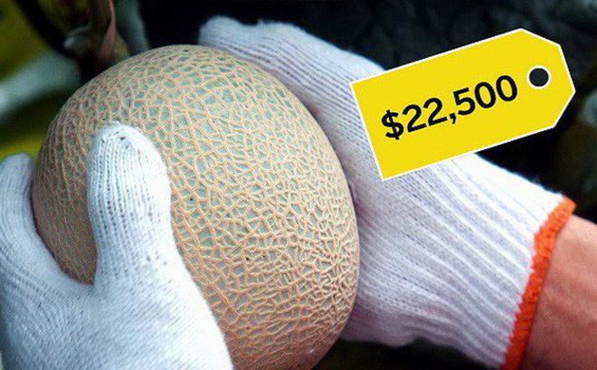 Một quả dưa lưới ở Nhật có thể có giá 22.500 USD (hơn 500 triệu đồng). Ảnh: BI.