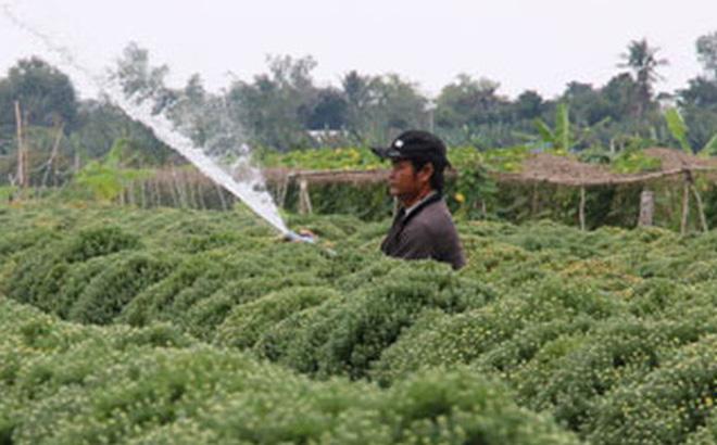 Nông dân làng hoa Sa Đéc tất bật chăm sóc hoa, kiểng phục vụ thị trường Tết nguyên đán. Ảnh: TÂM MINH