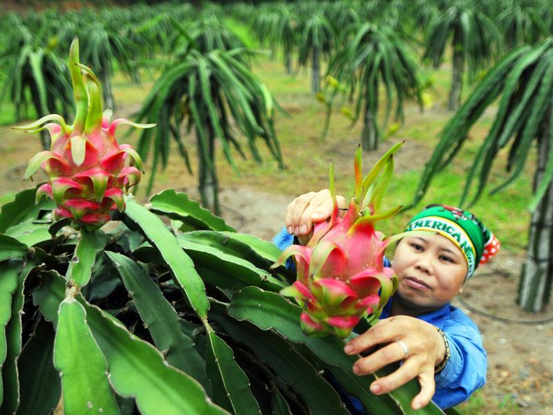Nông sản của Việt Nam đang chiếm lĩnh các thị trường lớn như Mỹ, Nhật Bản, EU